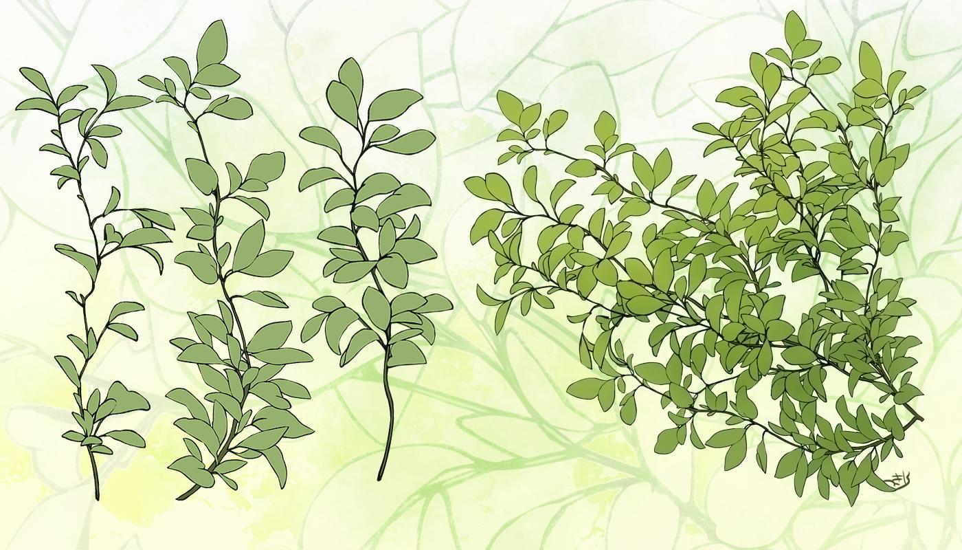 自作植物素材(ボケの葉と枝のみ)